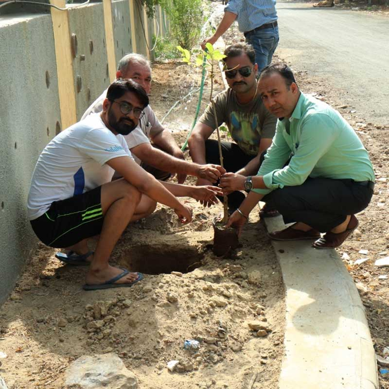 Tree Plantation(Neelkanth Orchid)